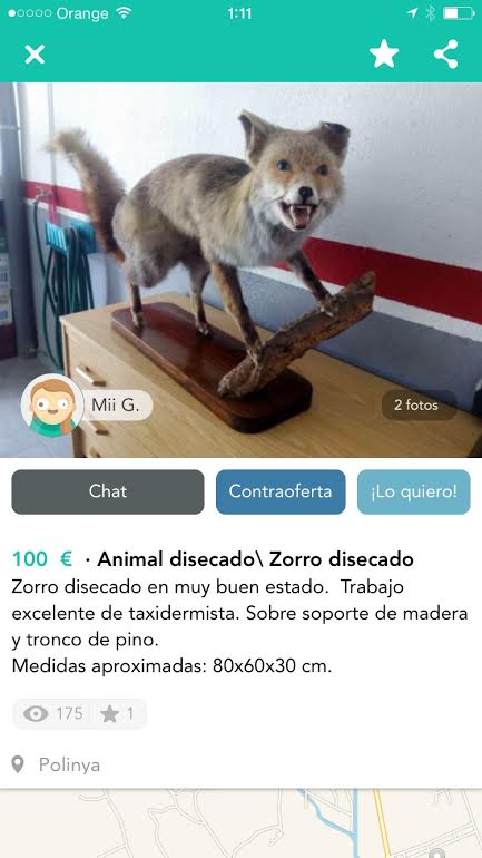 Animal disecado zorro