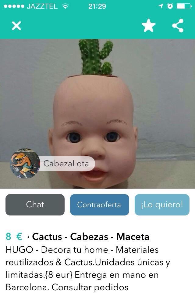 Cactus Cabezas