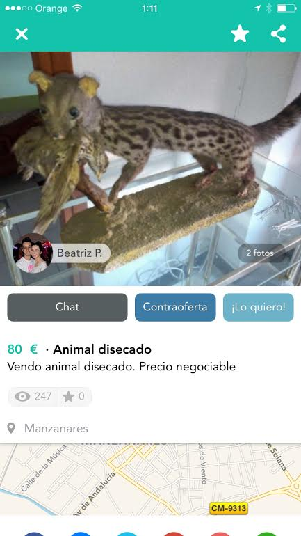 Animal disecado 80€