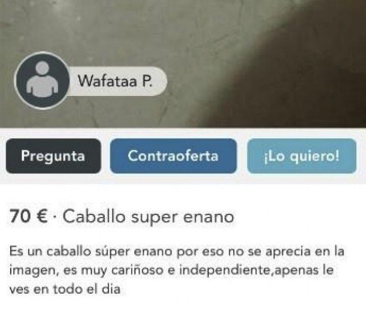 CABALLO SÚPER ENANO