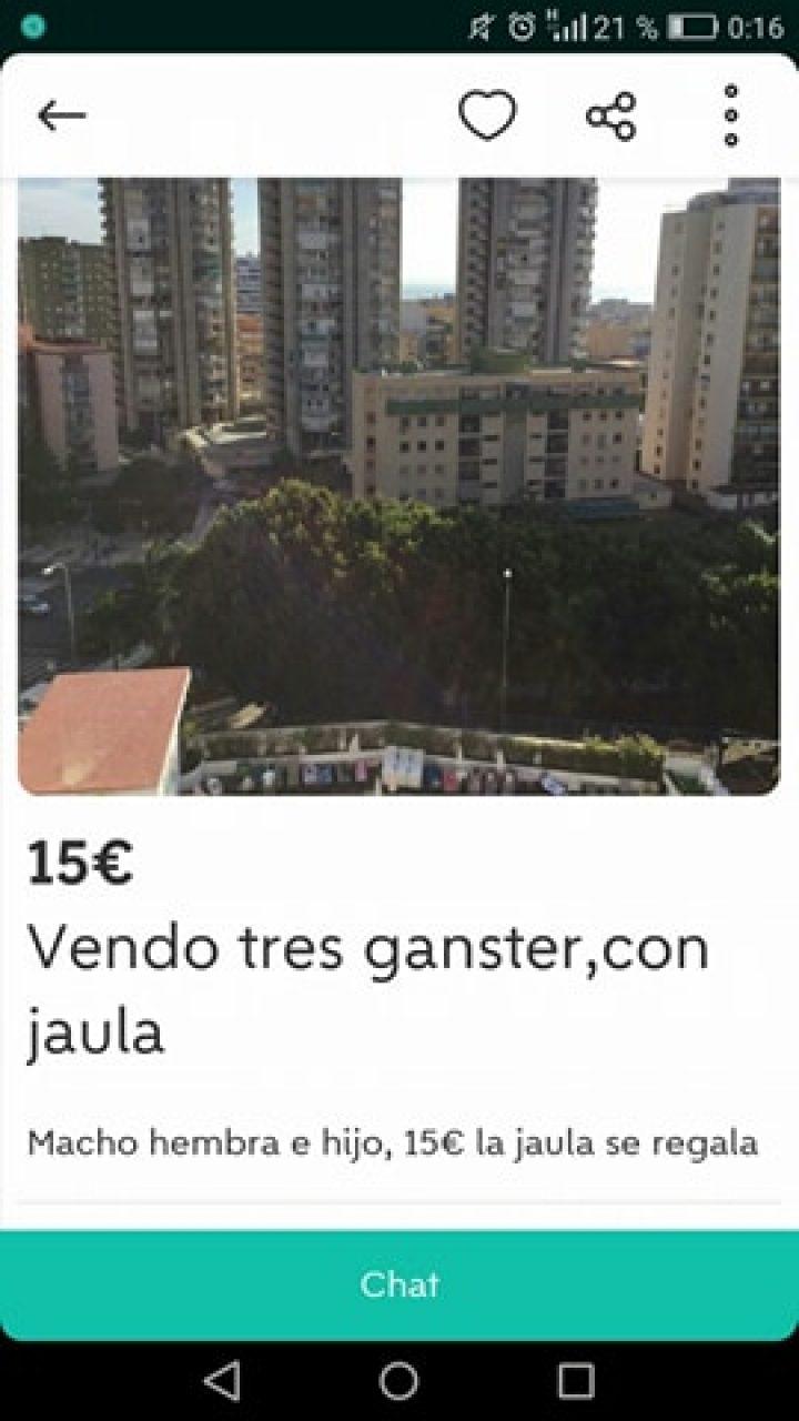 LOS VENDO CON JAULA