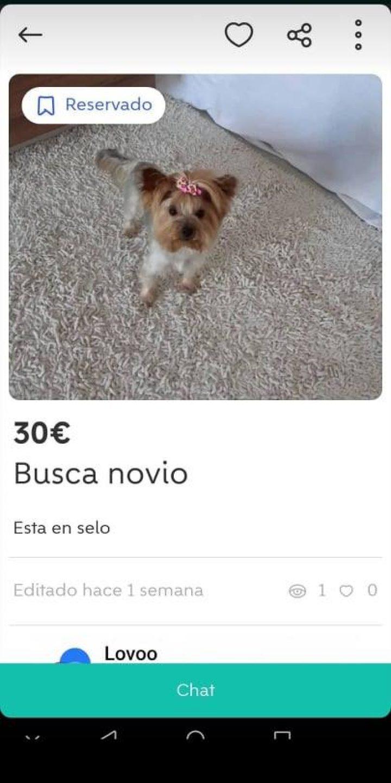 BUSCA NOVIO