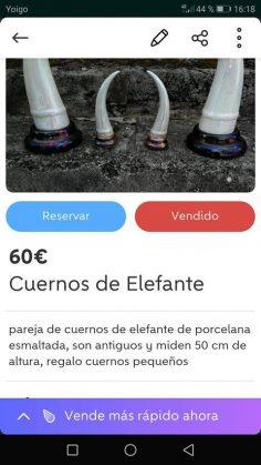CUERNOS DE ELEFANTE